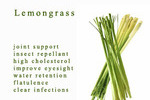 The Truth About The Health Benefits Of Lemongrass *secrets revealed*